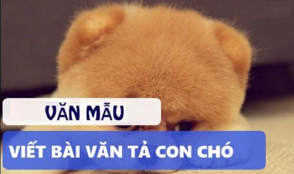 Lập Dàn Ý và Bài Văn Tả Con Chó Hay Nhât Năm 2019
