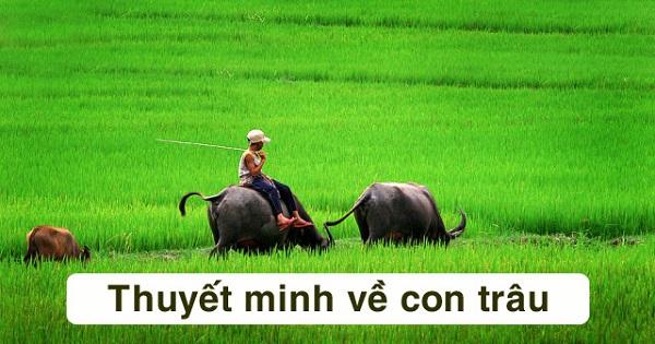 Bài Văn Thuyết Minh Con Trâu Lớp 9 Trong Làng Quê Việt Nam